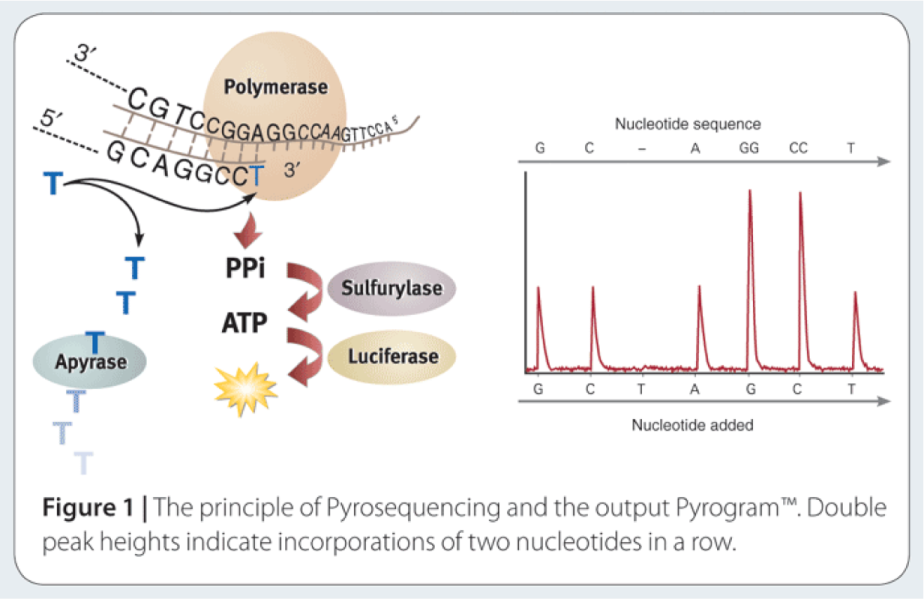pyrosequencing.png