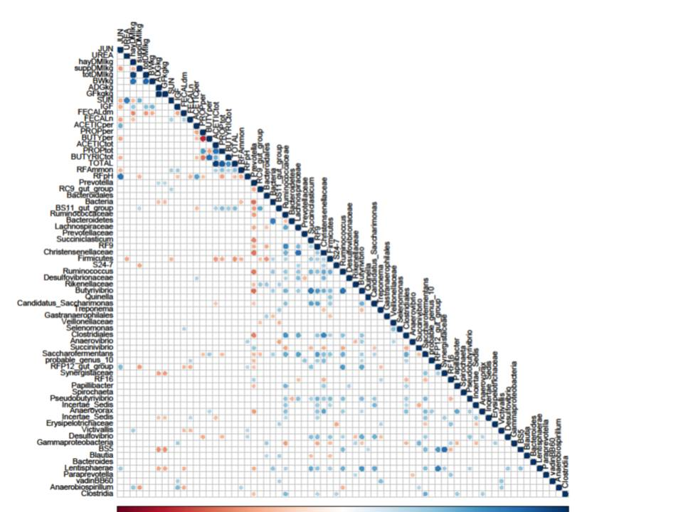 correlogram.jpg