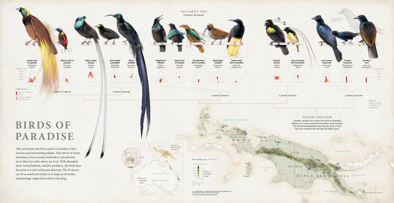 birds-of-paradise_final.jpg