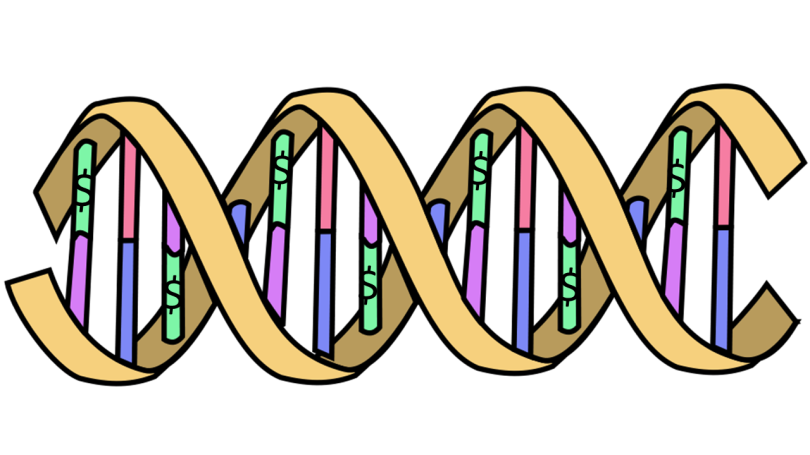 DNA double helix with dollar signs as a nucleotide.