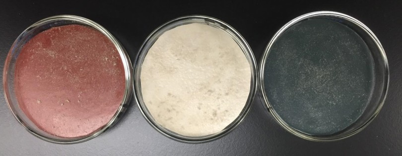 Vinyl flooring materials inside petri dishes and seeded with house dust for experimentation
