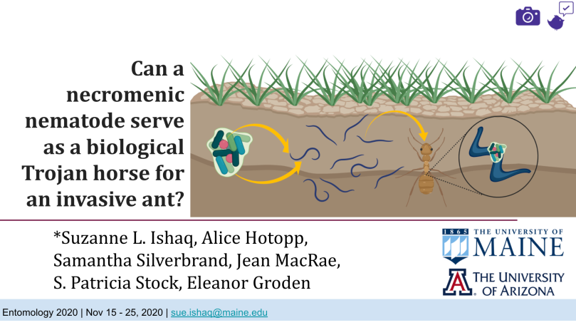"""Illustrated image of a cross section of the ground. A light brown ant is pictured in the ground along with a microbe. Text to the left of the image reads, """"Can a necromenic nematode serve as a biological Trojan horse for an invasive ant?"""". The names of six professors are listed below the text and image at the bottom left. In the bottom right corner, text reads, """"The University of Maine"""" with """"The University of Arizona"""" below it."""